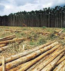 O caminho contrário do Desenvolvimento Sustentável
