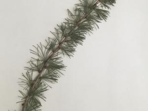 Hurkett Cove Herbarium