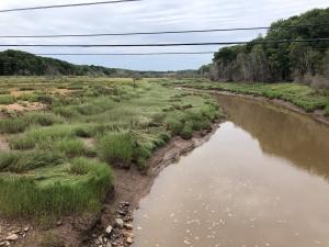 A Dying Salt Marsh