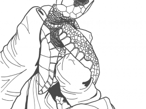 Hawksbill Turtle Hatchling Colouring Page