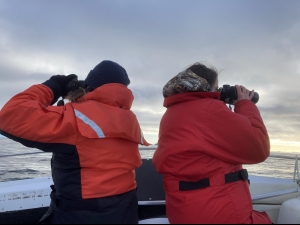 Transect survey of marine mammals
